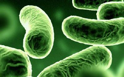 kórokozó baktériumok