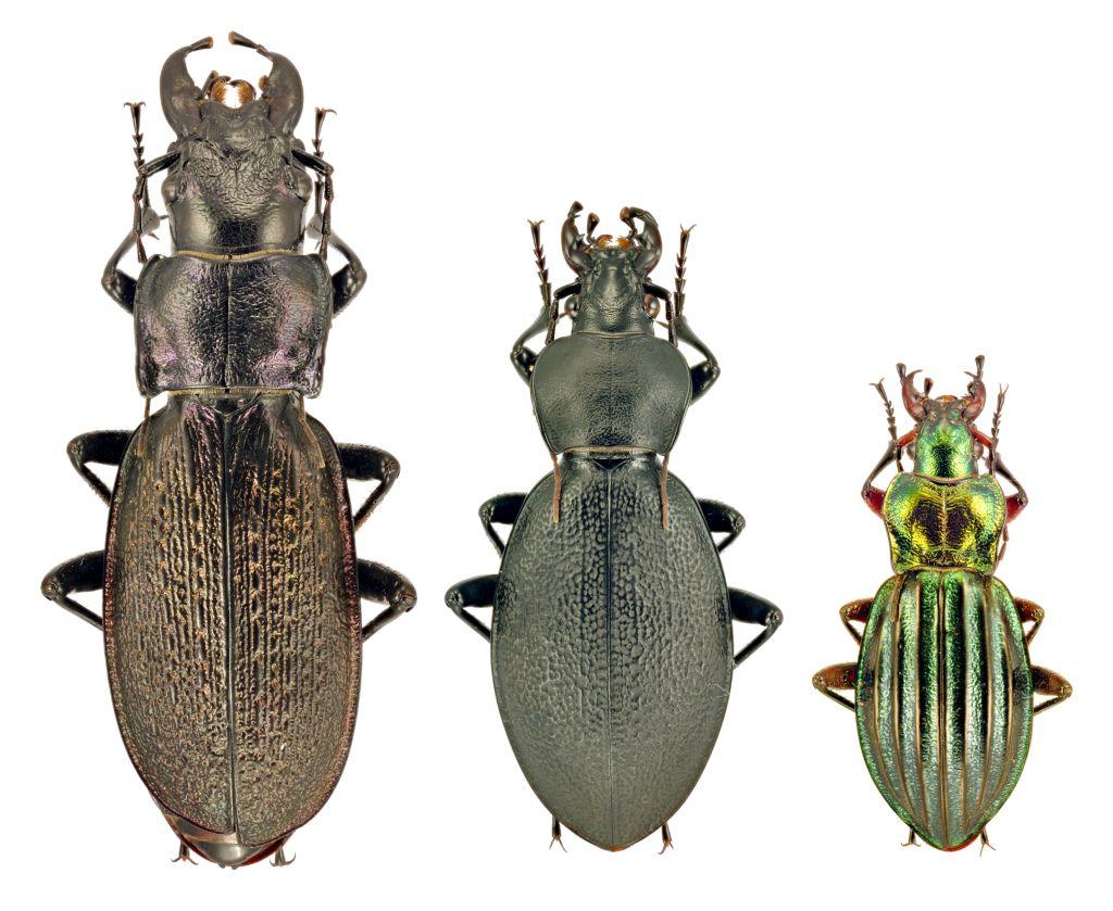 A szélvédőn szétkenődő bogarak száma alapján nagyot csökkent Európában a rovarok száma
