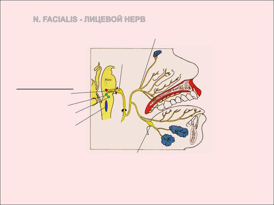 a nasopharynx és a sinusok parazitái menekülnek)