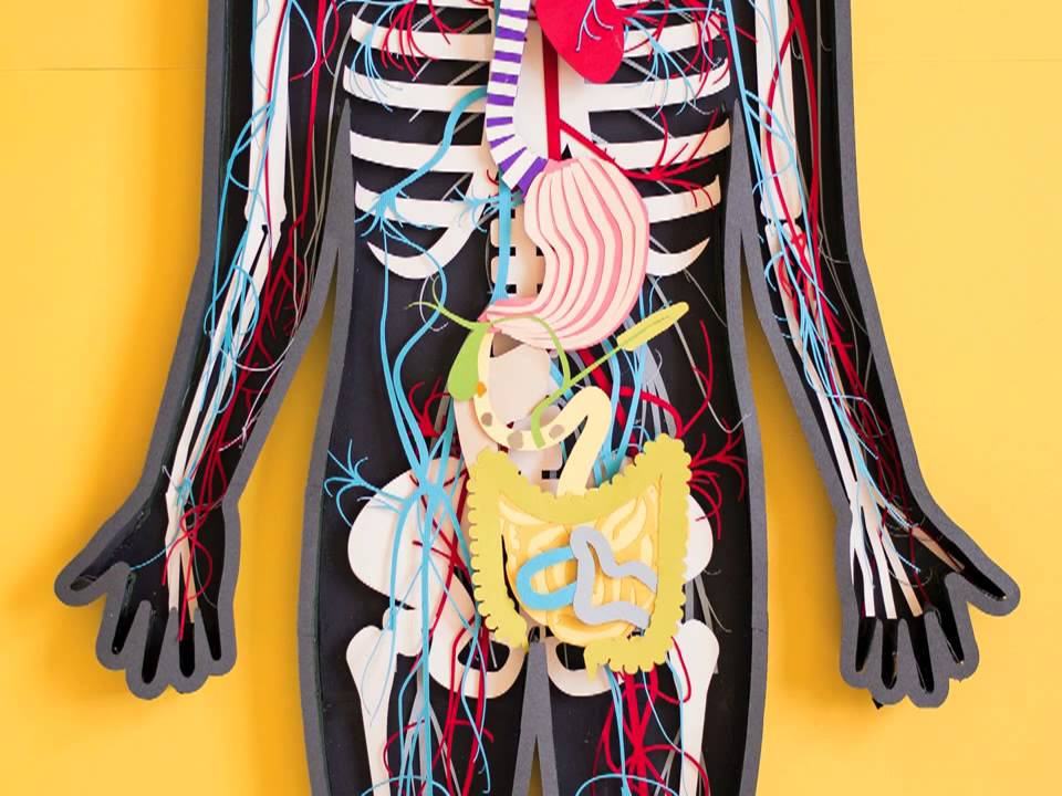 Hüvelyi problémák okai és kezelése - Tabletták a test minden parazitájához
