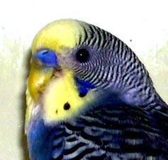 madarak parazitáinak kezelése