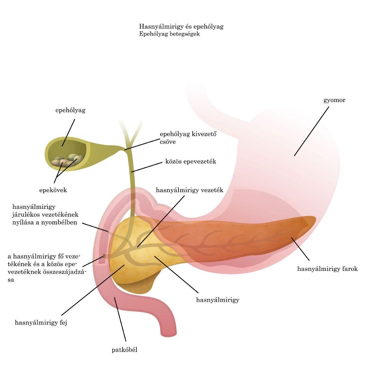 az emberi fonálférgek tüneteinek kezelése