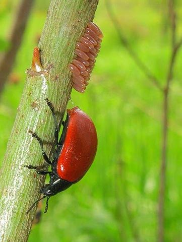 paraziták kezelése házilag a paraziták kezelése gyermekeknél