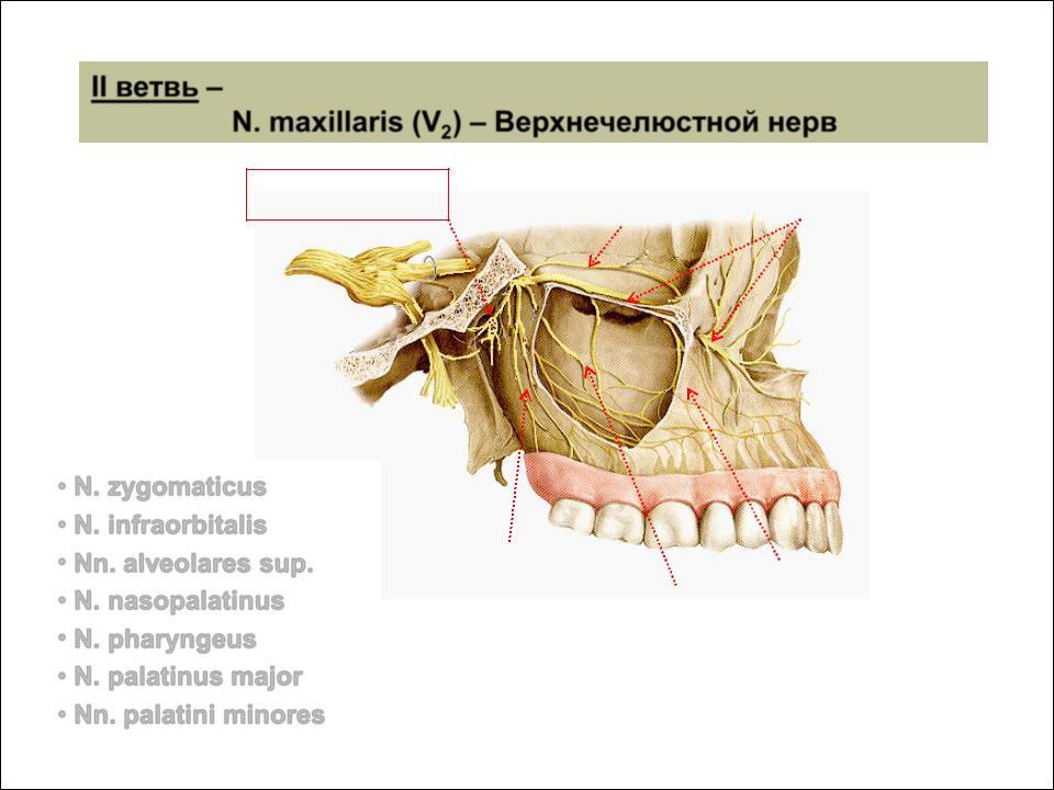a nasopharynx és a sinusok parazitái menekülnek