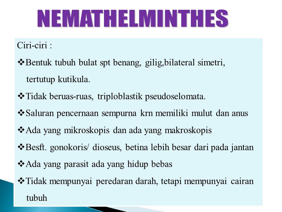 Les nemathelminthes ppt - Les nemathelminthes