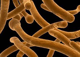 férgek baktériumok)
