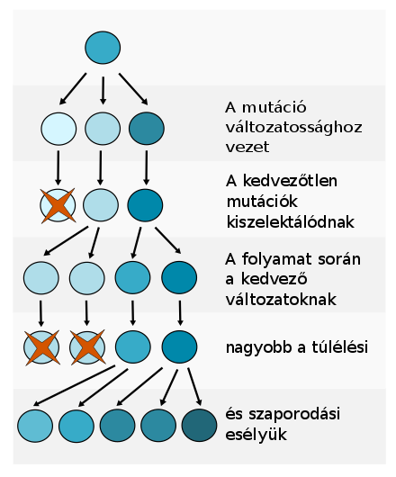 Biológiai kislexikon | Digitális Tankönyvtár