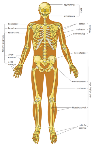 Mélyvénás trombózis 9 oka, 12 tünete, 6 kezelési módja [teljes leírás]