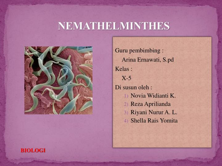 les nemathelminthes ppt
