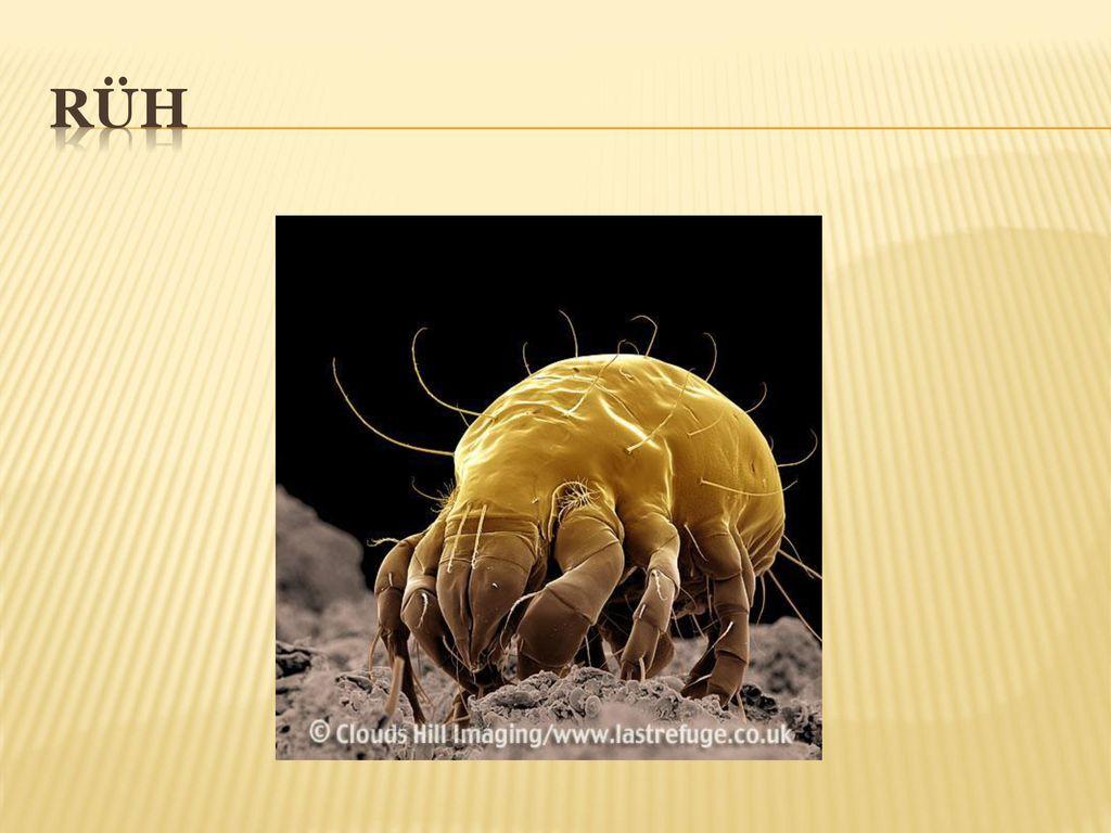 a bőrből eltávolított paraziták papilloma a szájpadlón