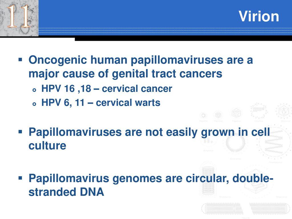papillomavírus 9