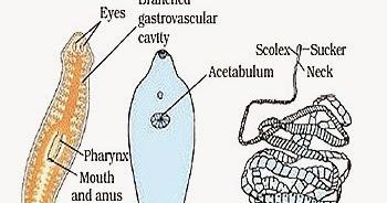 parazita az agyban hogy néznek ki a férgek a székben