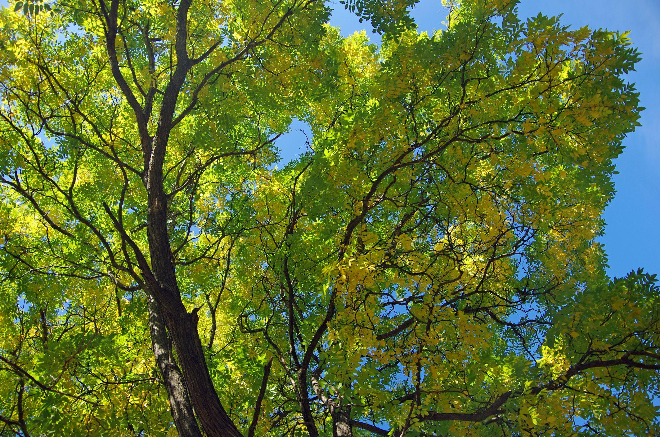 az annona reticulata levelek féreghajtó aktivitása