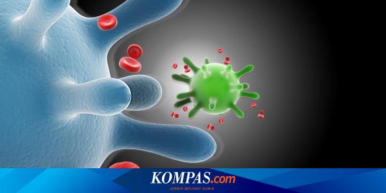 humán papillomavírus hpv kutil kelamin parazita ital