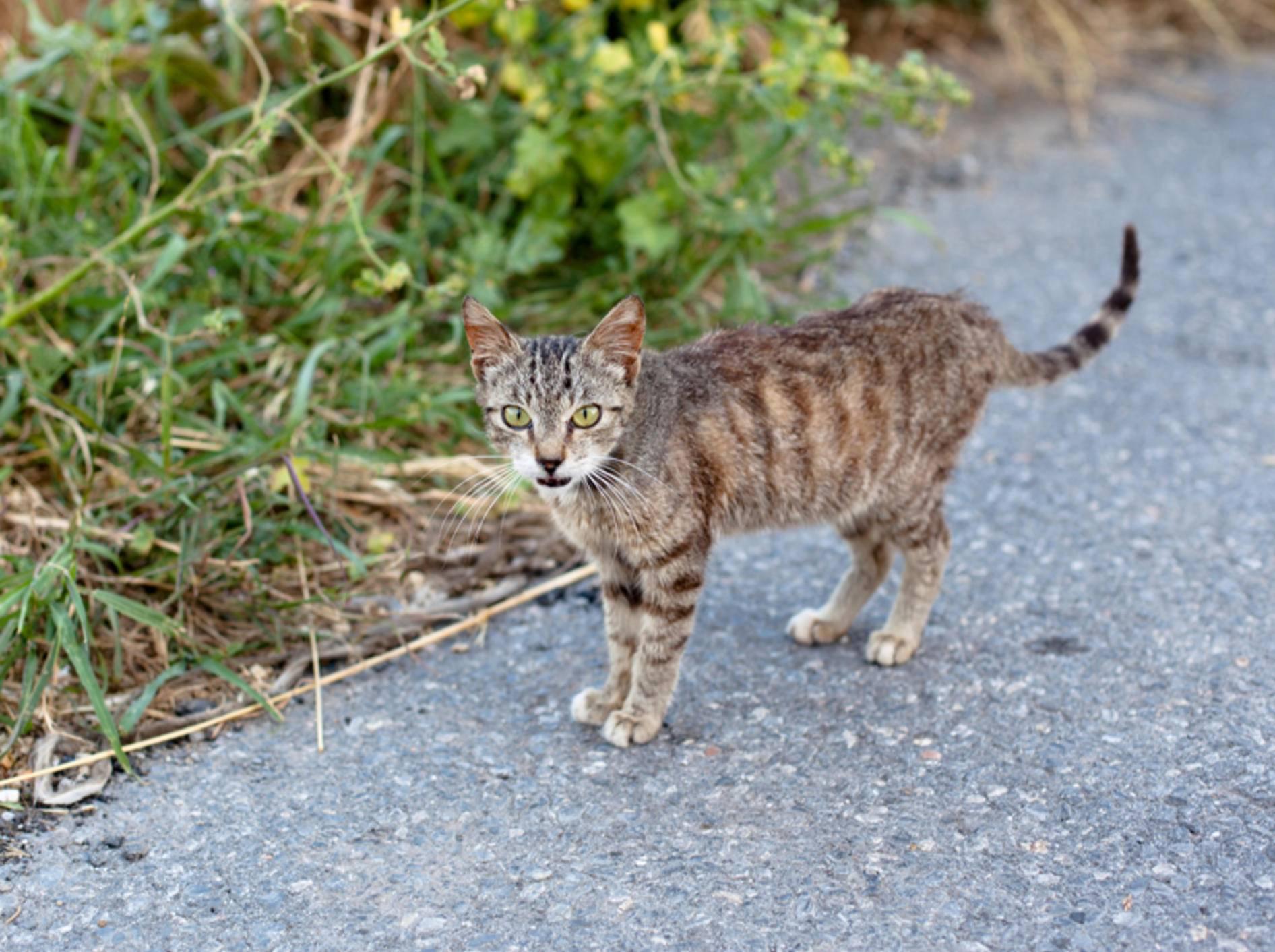 Behandlung von giardien bei katzen. Information: Giardien