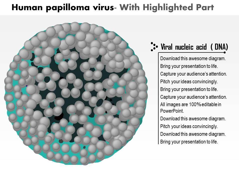 humán papillomavírus ppt
