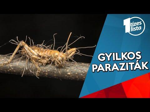 rovarok, amikor eltávolítják a parazitákat a testből)