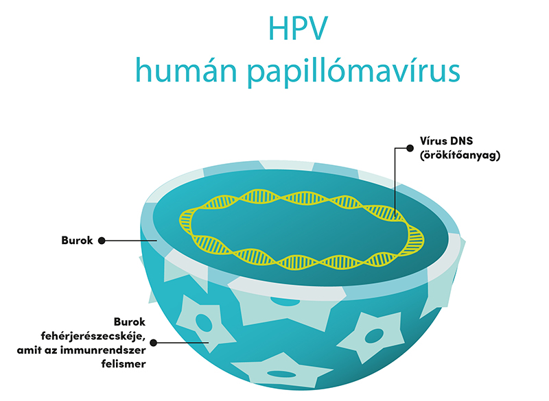a nemi úton nem terjedő emberi papillomavírus-fertőzés