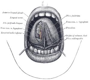 szemölcsök a szájban miből petefészekrák várható élettartama 4. stádium