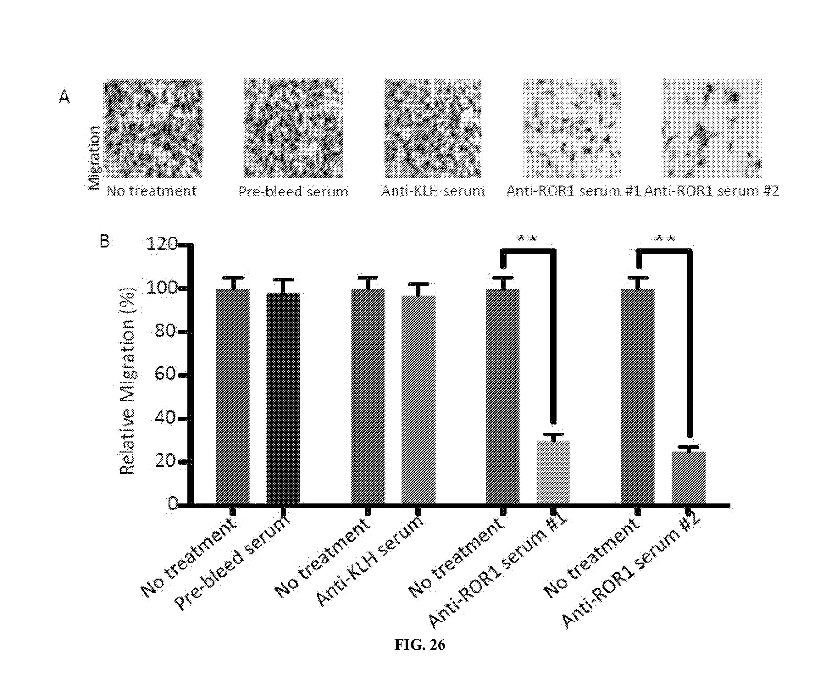 májrák-receptor