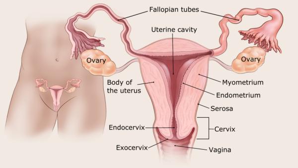 endometrium rák kiújulási aránya