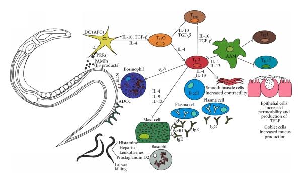 Helminthiasis és sclerosis, Féregpete- és protozoonvizsgálat | Lab Tests Online-HU
