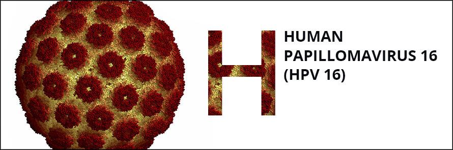 papilloma vírus pcr pozitív