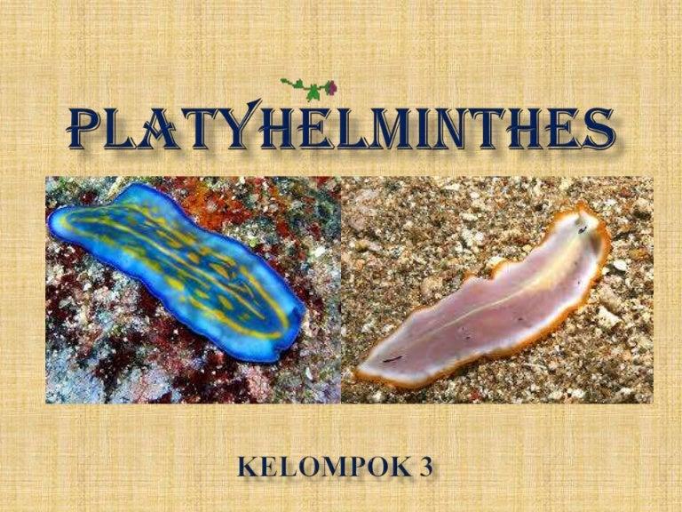 gambar filum platyhelminthes)