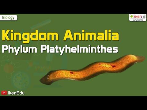 platyhelminthes trematoda fajok)