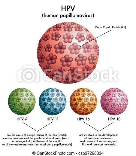 papillomavírus hím megelőzése