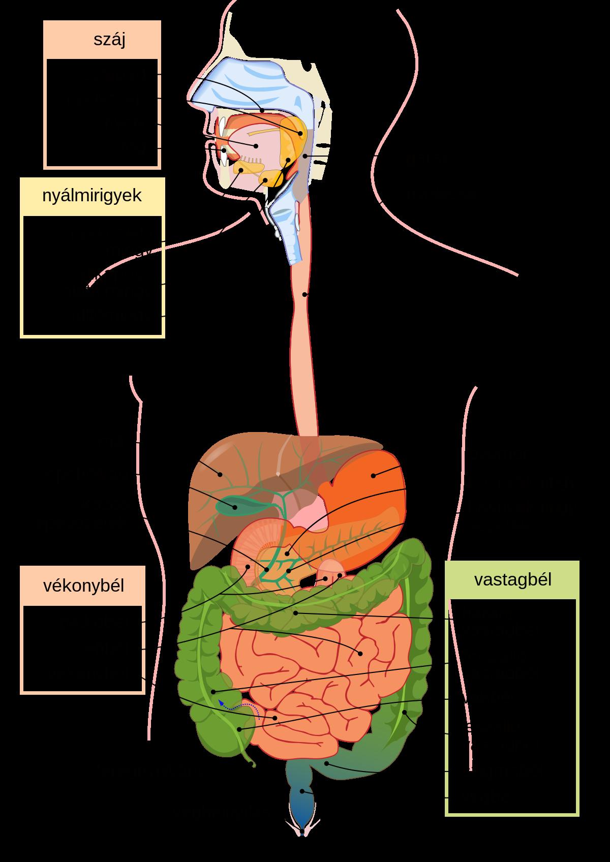 Giardia és helminták tünetei A giardiasis tünetei és kezelése