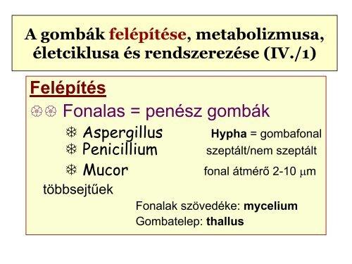 a helminthiasis életciklusa