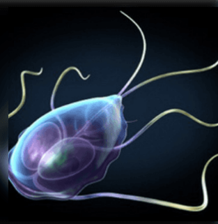 papilloma vírus meghatározása férgek, milyen tabletták