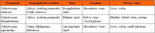 a schistosomiasis oka)