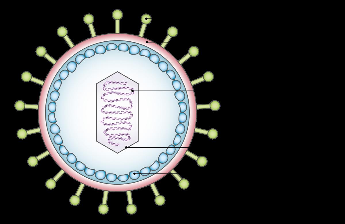 Onkogén vírus