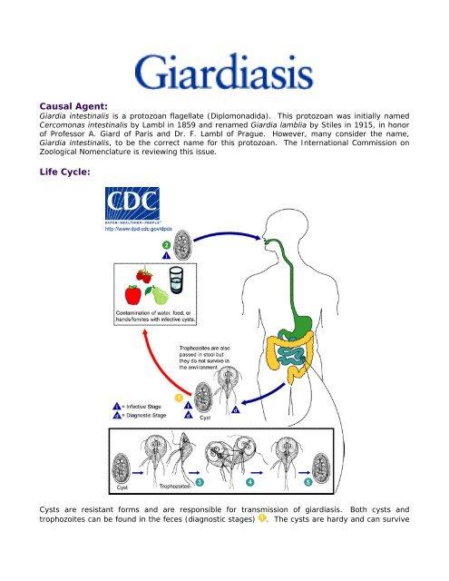 cryptosporidium és giardia az uszodákban)