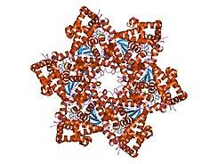 hpv vírus cos e