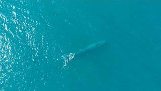 bálna kék kóddal