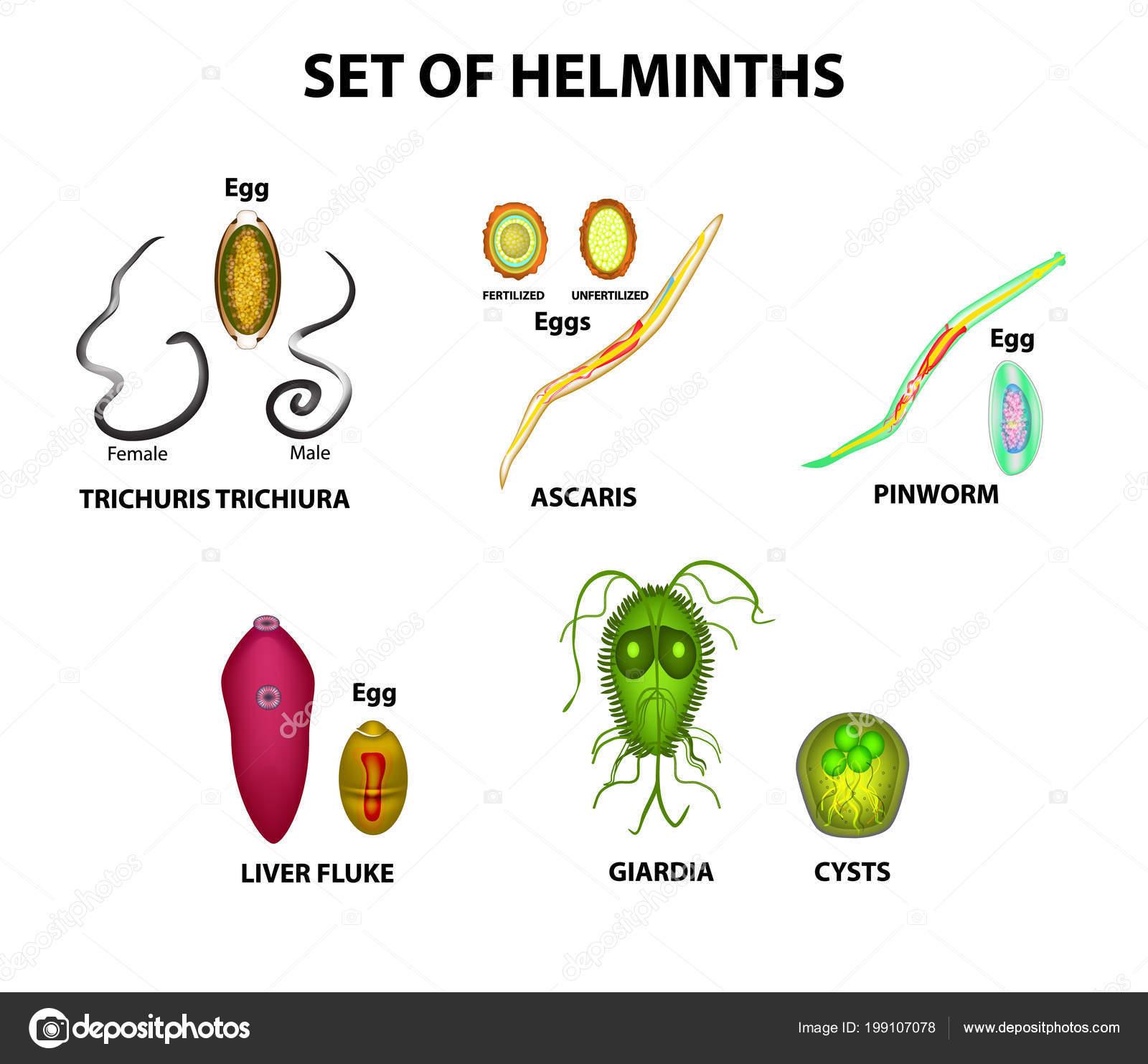 louise hey papillómák helminthosporium spicifera