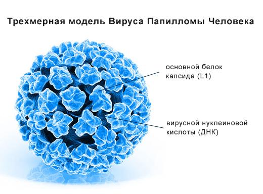 hpv vírus kb