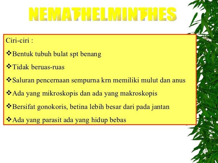 contoh nemathelminthes hidup bebas)