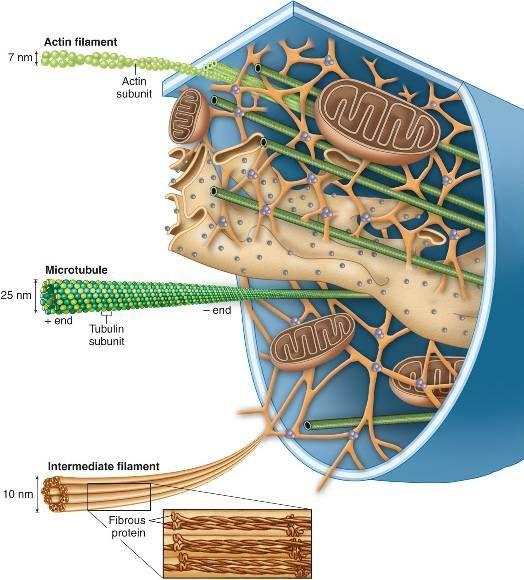 emberi papillomavírus kocsmázott