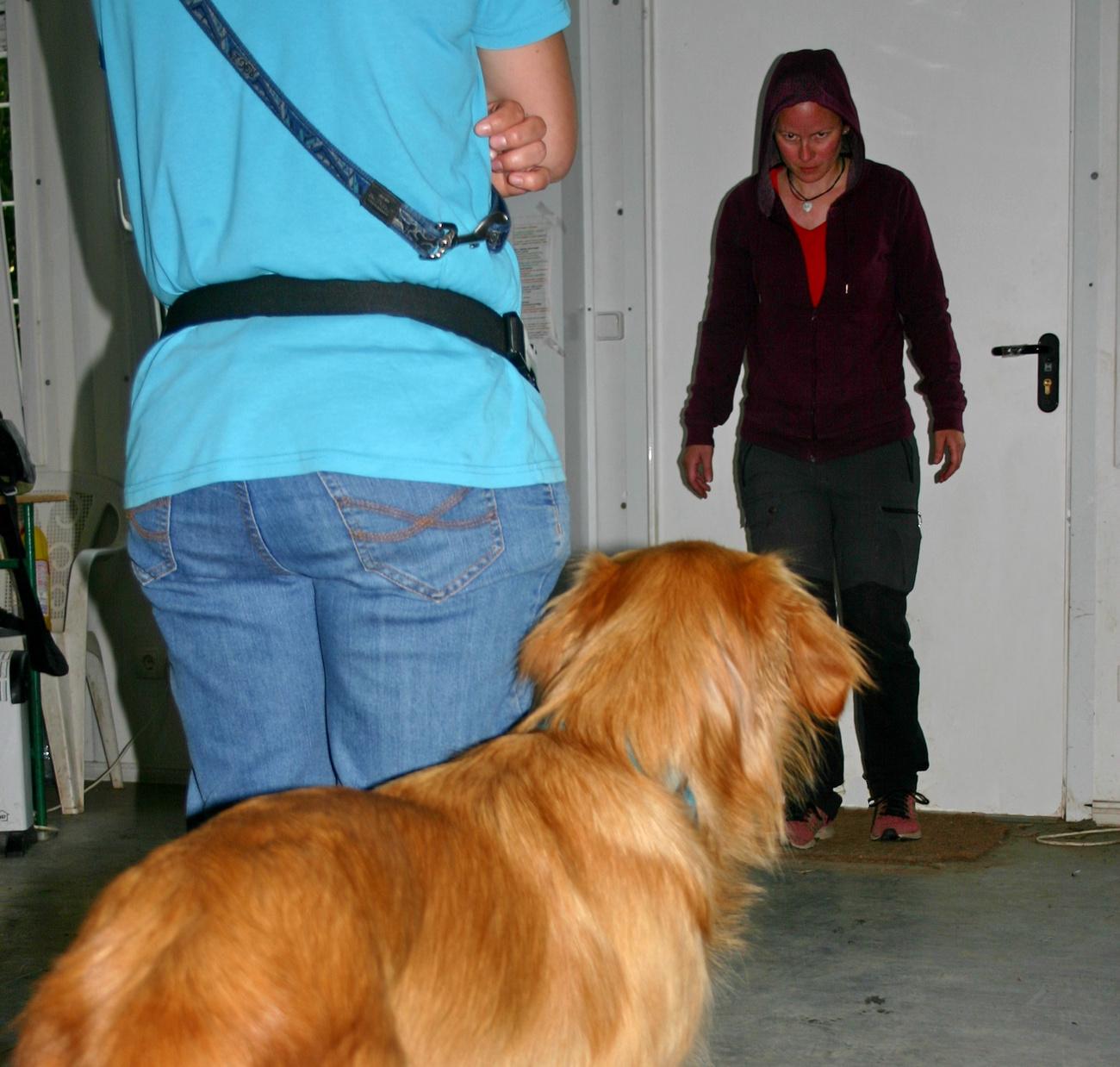kutyát figyelt