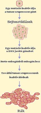 hashártya rák nincs kezelés)
