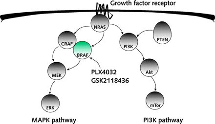 vastagbélrák mutáció braf pikkelyes papilloma nyelőcső p16