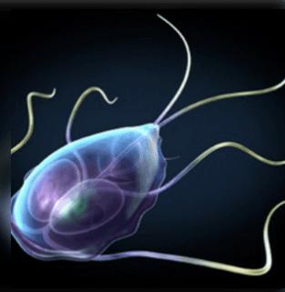 fertőzés jelei és parazita kezelés