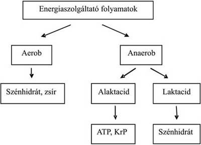 hóna alatti folyamatok)