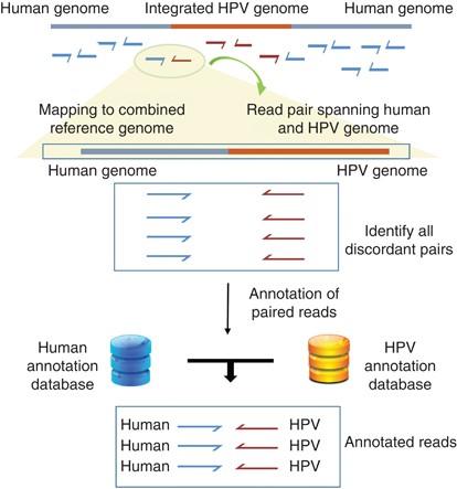 hpv mód diagnosztika