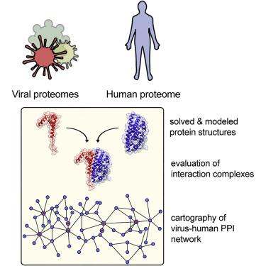humán papillomavírus vakcinaprogram