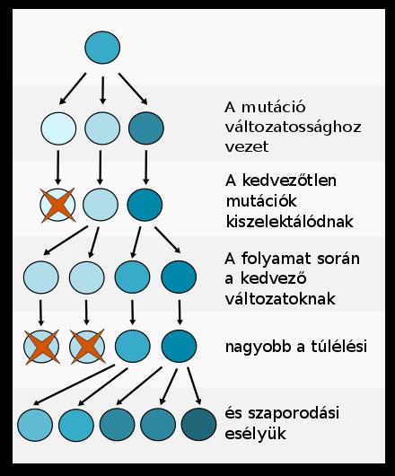 paraziták és a biológiai sokféleség biológiai elmélete